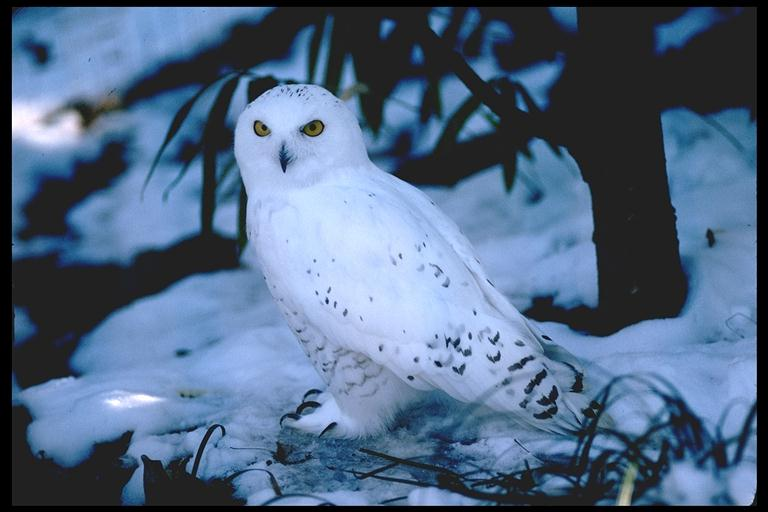 Buy snowy owl plush and get free shipping on AliExpresscom